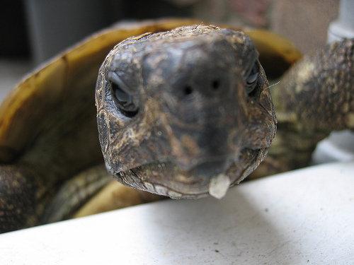 Как вылечить черепаху от