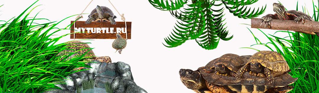MyTurtle.ru - Все о черепахах